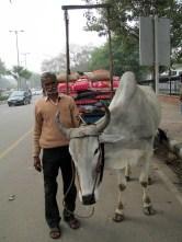 Delhi (37)