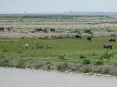 Ayeryawady River (69)