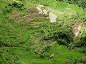 Banaue (12)