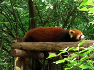 Panda (76)