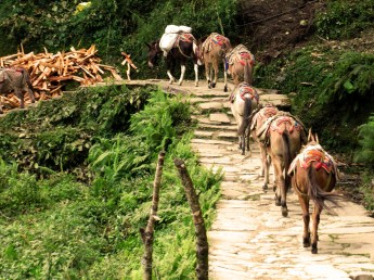 Annapurnas (220)