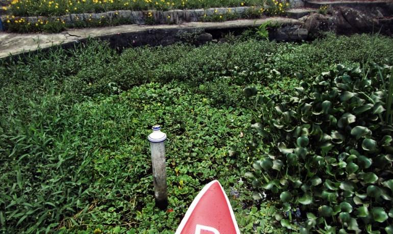12-flora-de-represa