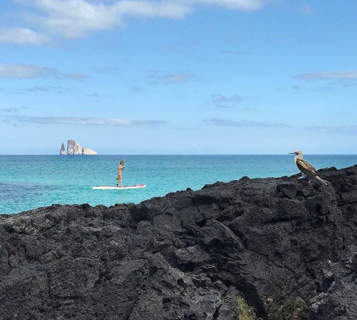 Remada de Stand Up Paddle assistida pela famosa ave das patas azuis