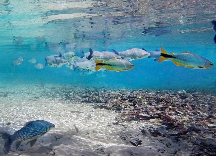 A água é tão transparente que aprece um aquário
