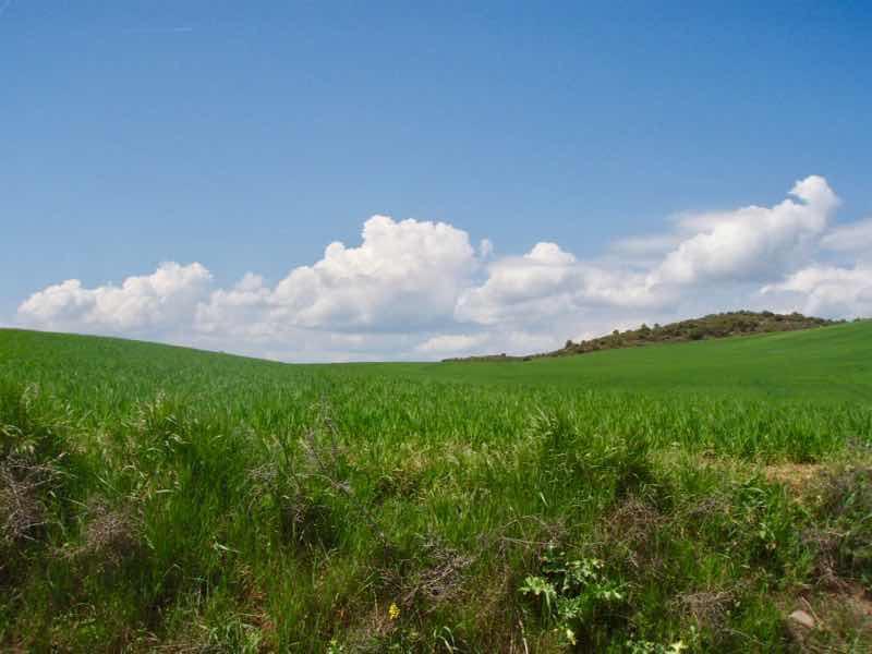 425麦畑