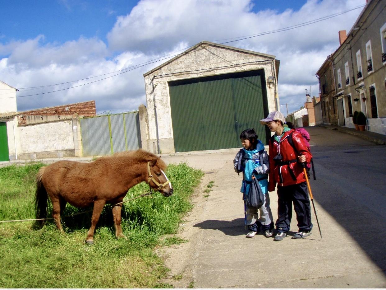 510ポブラシオン・デ・カンポス、サンティアゴ巡礼、道の馬1.2