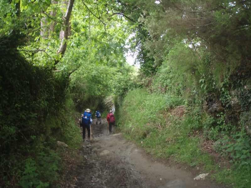 528 カミーノ トリアカステーリャ 家畜の道
