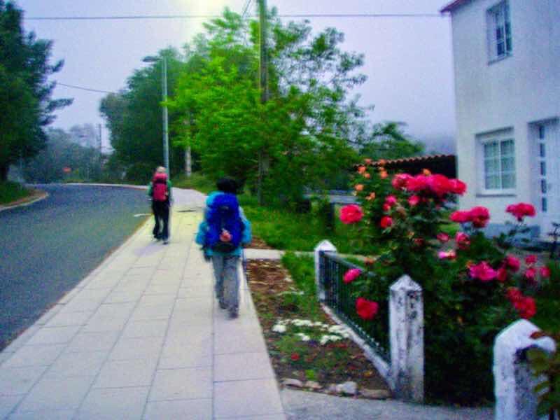 604 サンティアゴ巡礼 スペイン 植木赤い花 アルカ