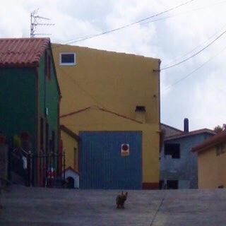 610スペイン巡礼 右緑 12犬 カミーノ フィステラ