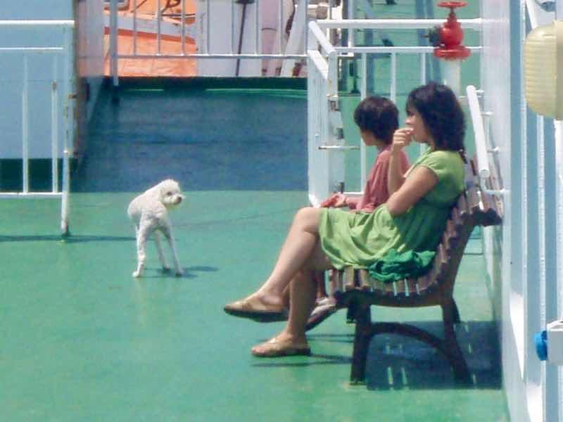 623メノルカ島 Menorca〜バルセロナ船デッキ犬