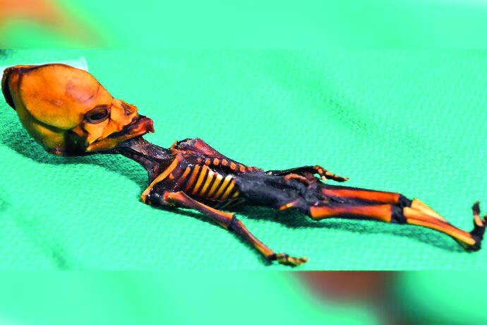 "Develan origen de ""momia"" miniatura encontrada en Chile"