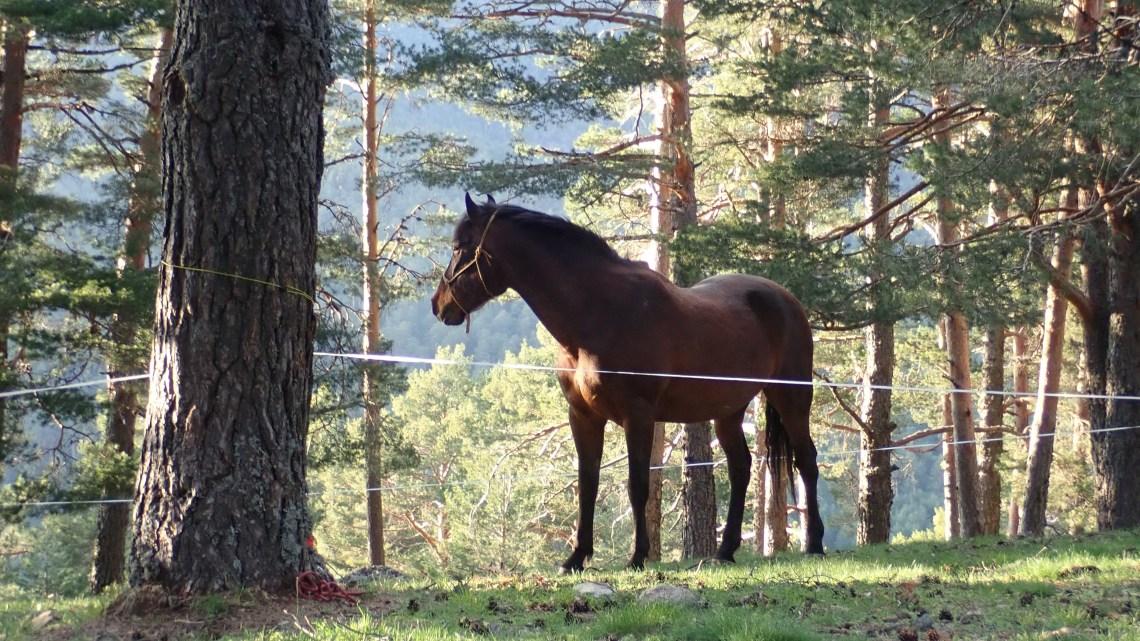 Acampando en ruta con el caballo (2)