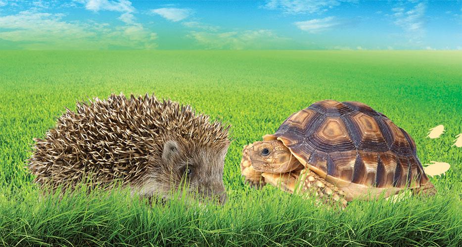 Hayvanlar kendilerini tehlikelerden nasıl korur
