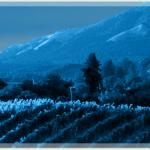 14 Agosto 2015….luna nuova….la luna dell'uva