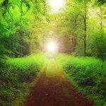 IL SENTIERO DELLA MINOR RESISTENZA: Manifestare ciò che desideri allineandoti alla natura