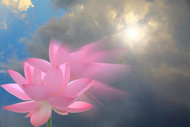 lotus-rising-sun