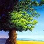 L'EGO…AMIAMOLO PER CIO CHE è…(da leggere)