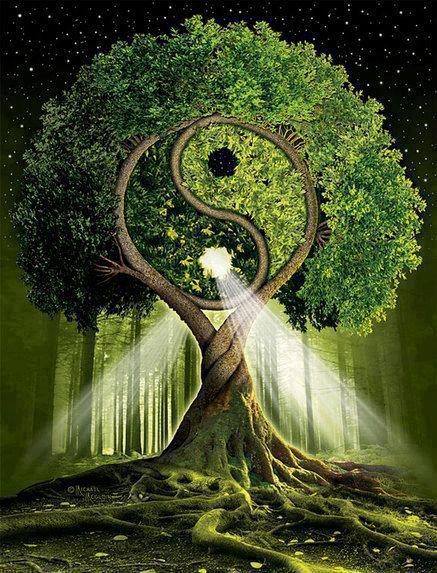 tao-albero