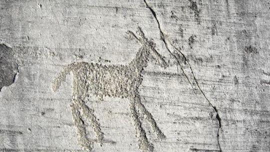Il Cammino di Carlo Magno tra Flora e Fauna | Cammini d'Italia