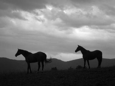 Cammino Terre Mutate Tappa 3 Camerino Fiastra cavalli nel paesaggio