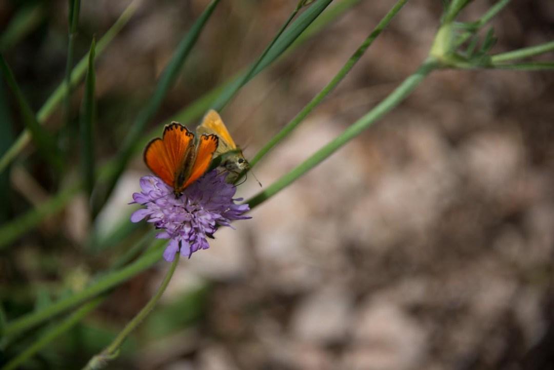 Cammino Terre Mutate Tappa 4 Fiastra Ussita la biodiversità del parco dei sibillini (2)