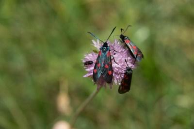 Cammino Terre Mutate Tappa 4 Fiastra Ussita la biodiversità del parco dei sibillini (5)