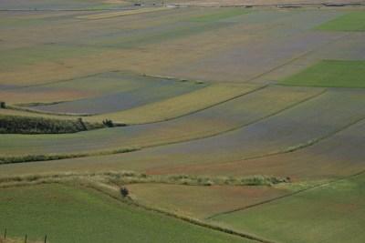 Cammino Terre Mutate Tappa 8 Castelluccio di Norcia - Arquata del Tronto (23)