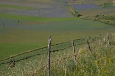 Cammino Terre Mutate Tappa 8 Castelluccio di Norcia - Arquata del Tronto (25)