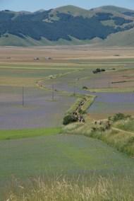 Cammino Terre Mutate Tappa 8 Castelluccio di Norcia - Arquata del Tronto (33)
