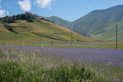 Cammino Terre Mutate Tappa 8 Castelluccio di Norcia - Arquata del Tronto (41)