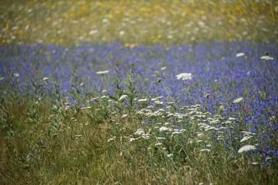 Cammino Terre Mutate Tappa 8 Castelluccio di Norcia - Arquata del Tronto (55)