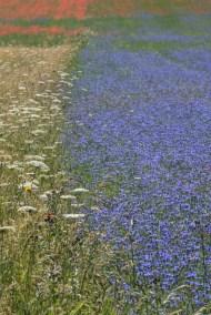 Cammino Terre Mutate Tappa 8 Castelluccio di Norcia - Arquata del Tronto (57)