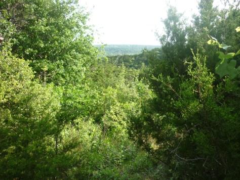 prime GCWA habitat.1