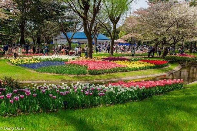 Các loại hoa ở công viên Tachigawa Tokyo