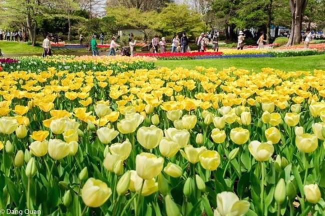 Đua nhau đi ngắm hoa ở công viên Tachigawa