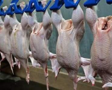 Nhật Bản chính thức đồng ý nhập khẩu thịt gà Việt Nam