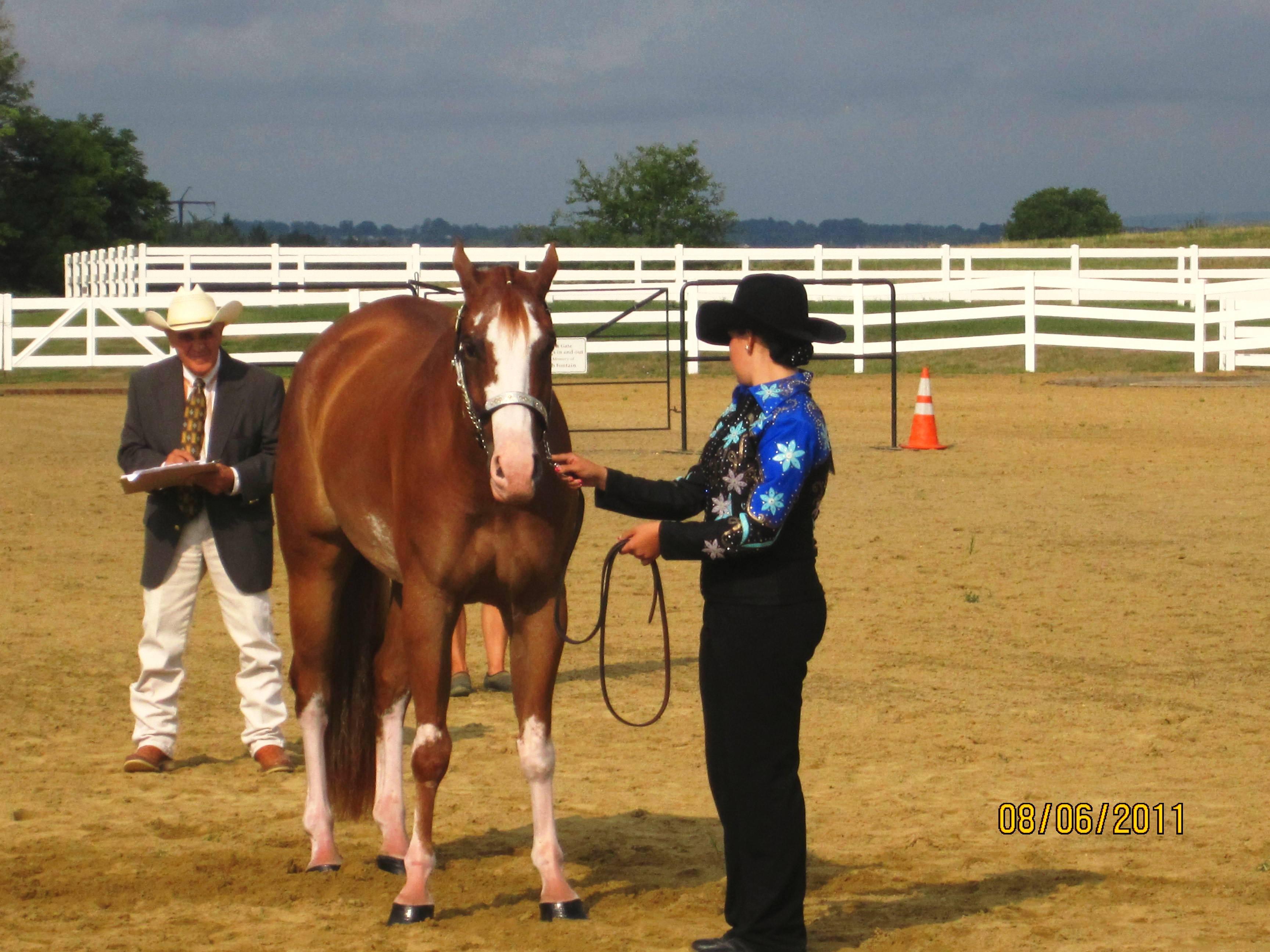Montgomery County 4 H Horse Round Up
