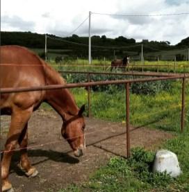 cavalli-paddock