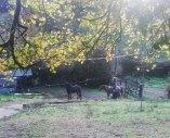 santa-lucia-cavalli