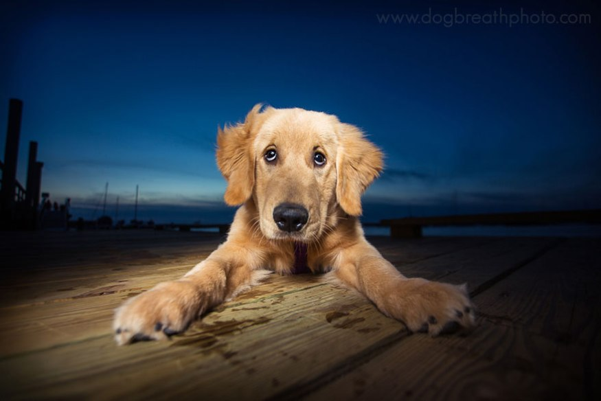 dog-breath-photography-kaylee-greer-11-cotw