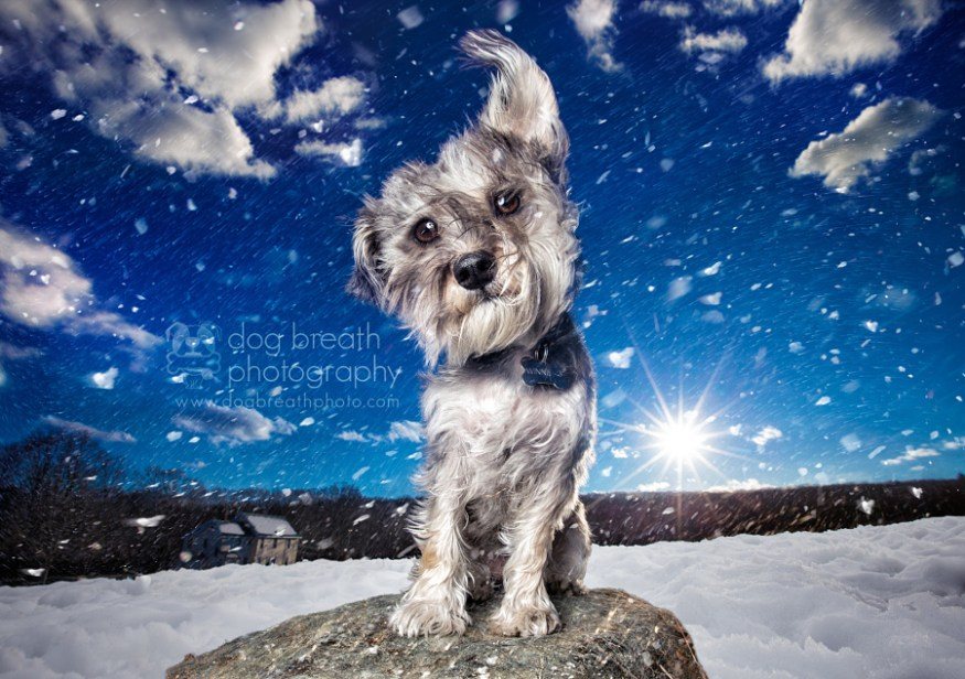 dog-breath-photography-kaylee-greer-31-cotw