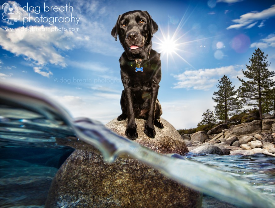 dog-breath-photography-kaylee-greer-34-cotw