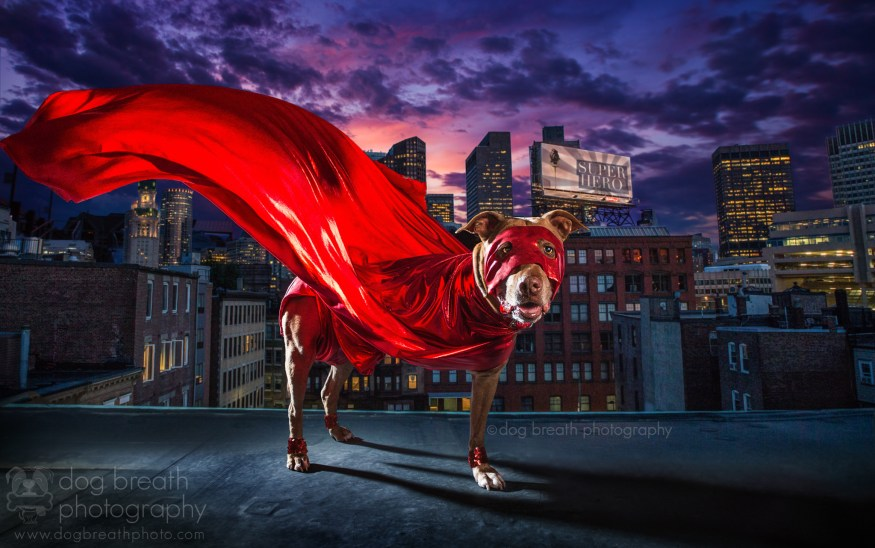 dog-breath-photography-kaylee-greer-44-cotw