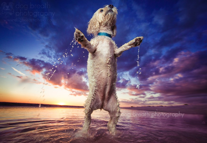 dog-breath-photography-kaylee-greer-45-cotw