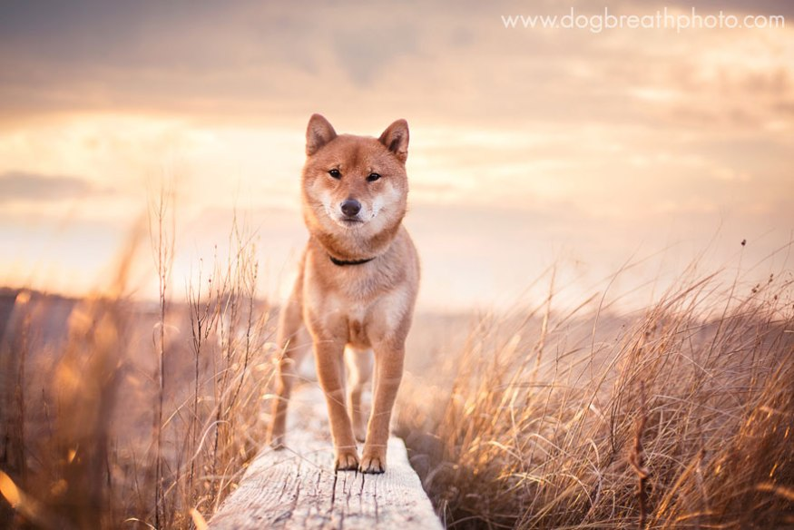 dog-breath-photography-kaylee-greer-7-cotw