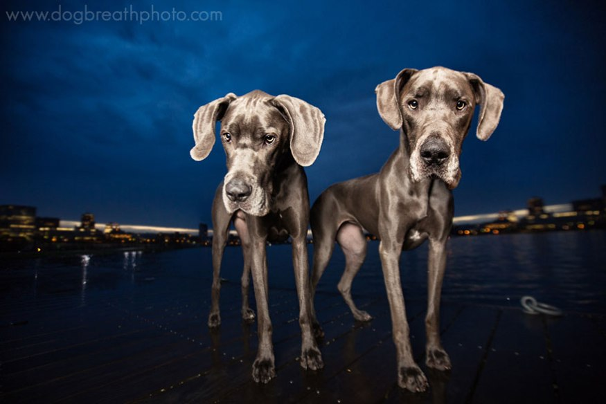 dog-breath-photography-kaylee-greer-9-cotw