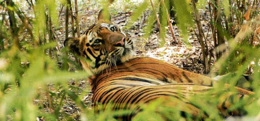 The Pench National Park