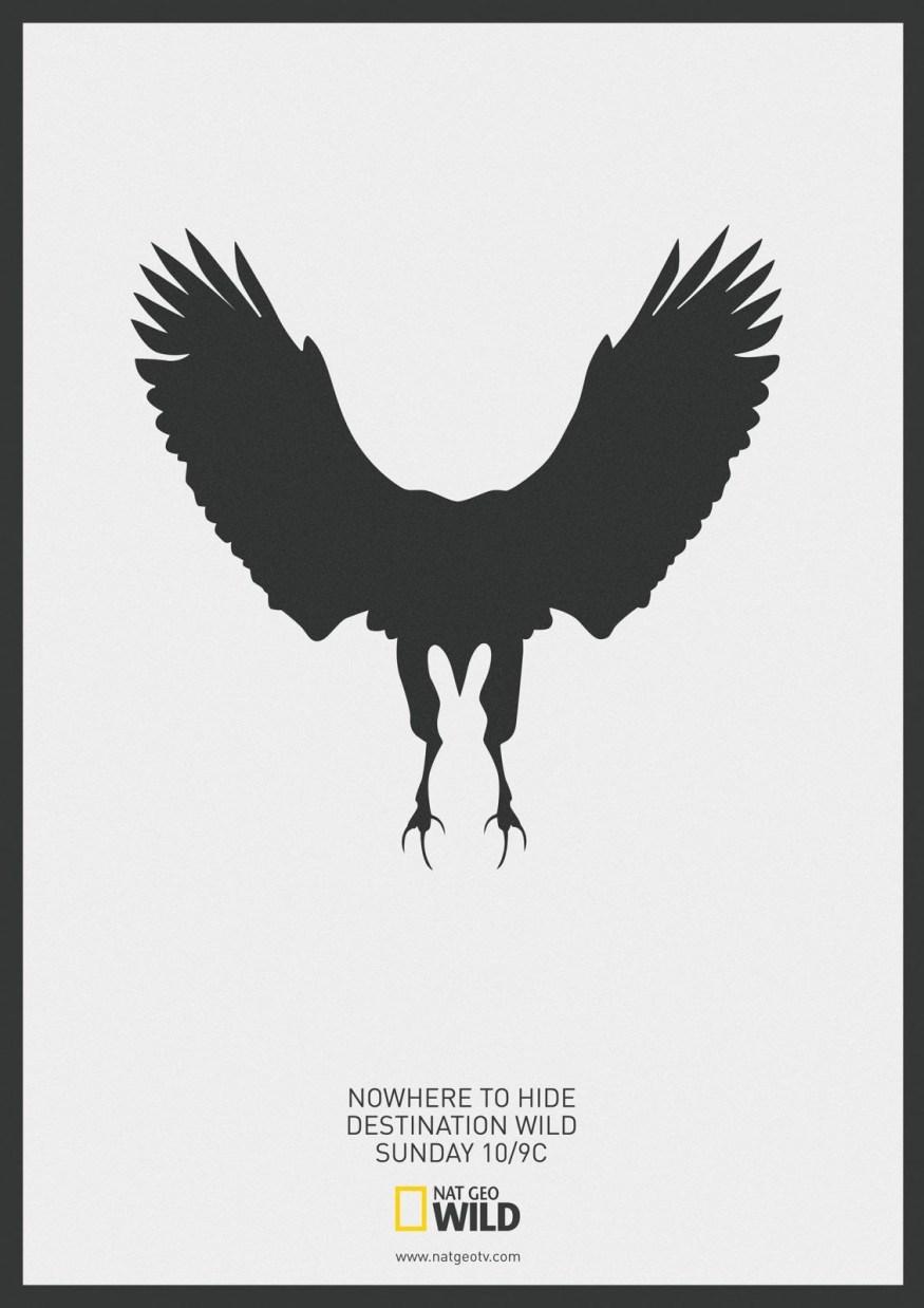 National Geographic | Eagle | Destination Wild |