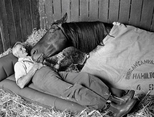 Racehorse trainer Tommy Woodcock with his champion racehorse Reckless on the night before running second to Gold and Black in the Melbourne Cup of 1977 -