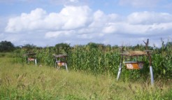 king-successful-beehive-fence1_3_